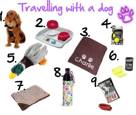 puppy essentials essentials for travelling with dogs dragons and dust