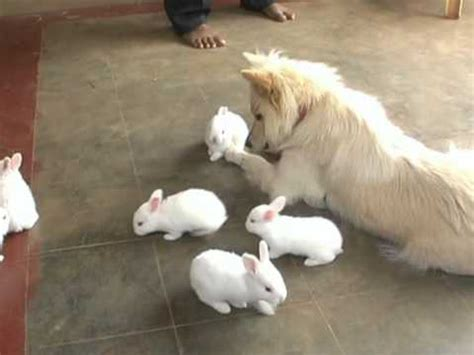 rabbit dogs rabbit friends mpg