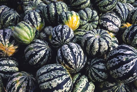 speckled  striped gourd