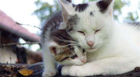 wann machen katzenbabys die augen auf babykatze als beliebtes haustier babykatzen