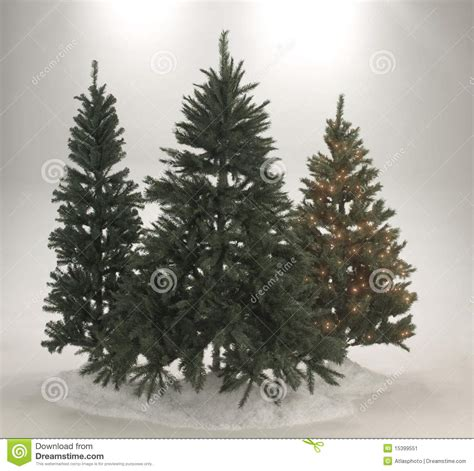 evergreen christmas trees stock image image 15399551