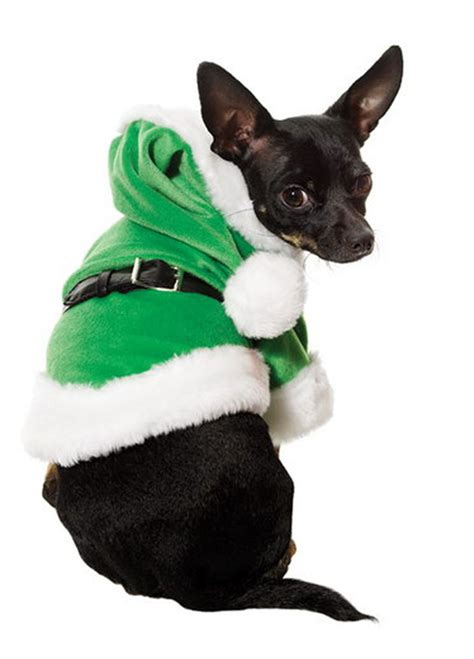 Dogs in christmas costumes dog costume christmas