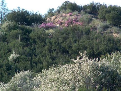 how to landscape a hillside slope to stabilize and control