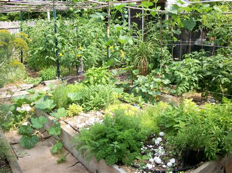 image gallery herb garden design idea