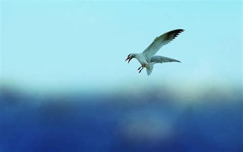 flying on birds flying in the sky wallpaper