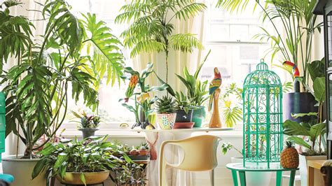 the jungle look indoor plants home the times the
