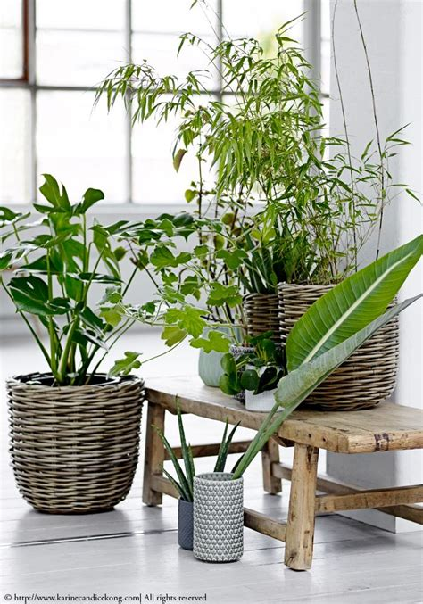 plant bench indoor 25 best ideas about rustic bench on pinterest rustic