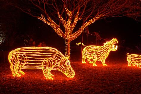 portland zoo light oregon zoo brew lights promo code library and zoo