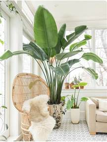indoor vine best 25 indoor palms ideas on pinterest outdoor palm