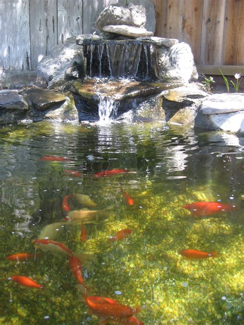 backyard waterfall pond goldfish ponds water gardens the pond doctor