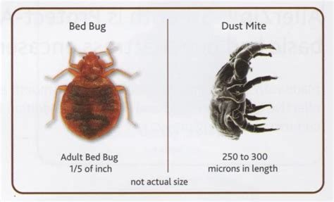 bed bug dust dust mite bites vs bed bug bites