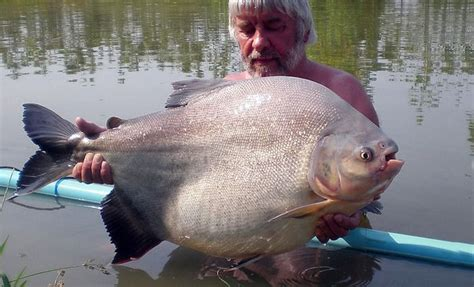 pacu teak tree fishing lake chiang mai thailand