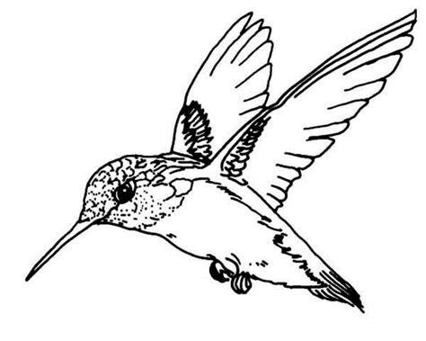 hummingbird coloring page hummingbird coloring pages sketch coloring page