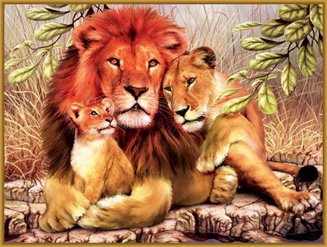 imagenes de la familia de animales imagenes de familias de leones bebes imagenes de leones