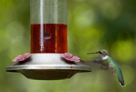 attracting hummingbirds to your garden well done