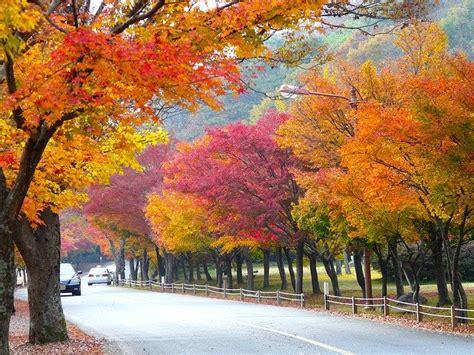 autumn season colorful leaves  photo  pixabay
