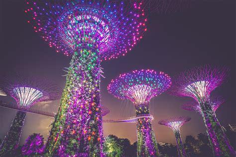domain christmas tree lighting 2018 images gratuites nuit fleur parc d 233 coration de no 235 l feux d artifice jardins pr 232 s de la