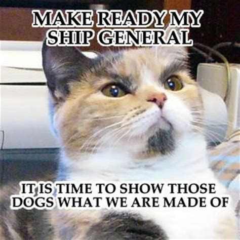 Random Cat Meme - funny picture clip the rise of funny cat pictures