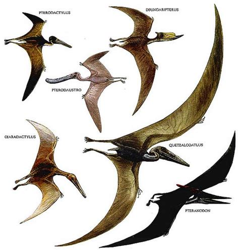 dinosauro volante types of flying dinosaurs www pixshark images