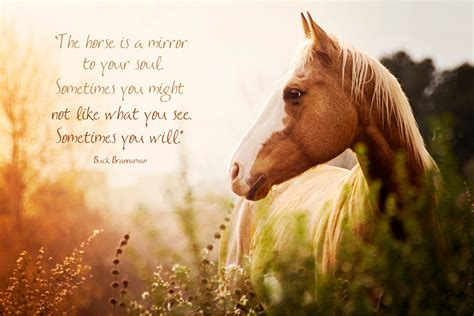 quotes about horses happiness and horses thelove4happiness