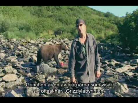 timothy treadwell bear attack videos amie huguenard videos trailers photos videos