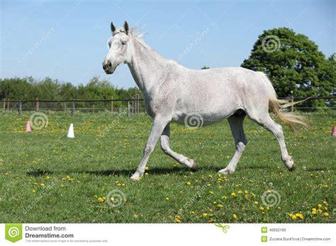 nice hourse pin horses nice photo photography season snow trees white