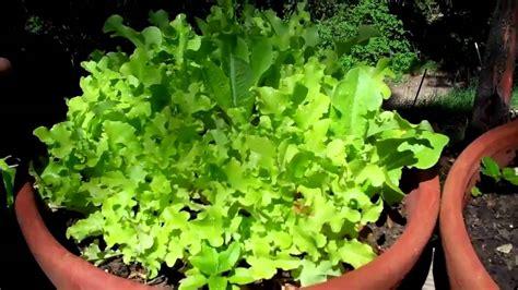 How to Vegetable Garden   IN POTS!   YouTube
