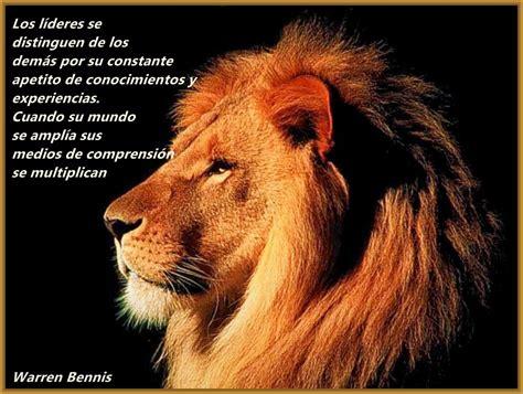 imagenes de leones lindas fotos de leones con mensajes muy originales imagenes de