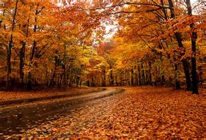 best places to see fall colors the top 10 places to see fall foliage in toronto