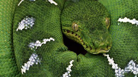 Python Software Foundation python v python software foundation fights for trademark