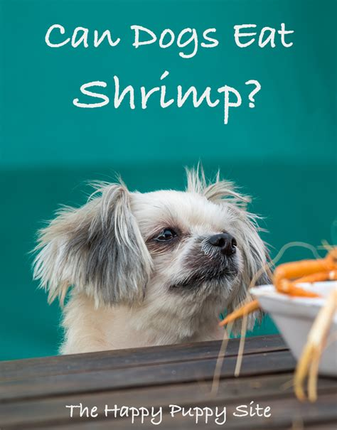 can dogs eat cooked shrimp can dogs eat shrimp healthy guide from the happy puppy site