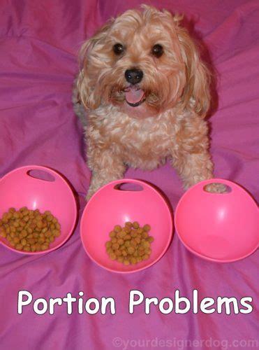 yorkie food portions welcome to the yourdesignerdog yourdesignerdog