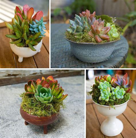 succulent pots hayfield house succulents