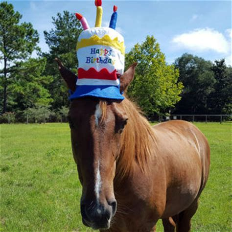 birthday hat for horse or pony with from mybuddybling equine