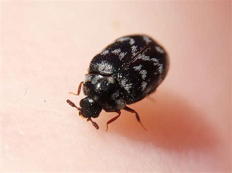Pest control san antonio pest control services san antonio bug