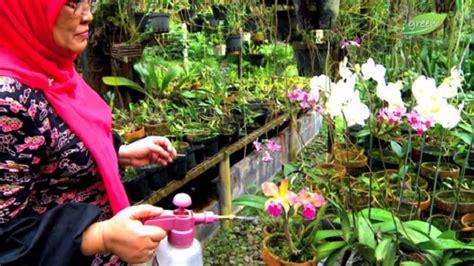 Pupuk Hantu Untuk Bunga Anggrek pupuk anggrek agar cepat berbunga bibitbunga