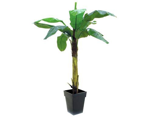 Blumen Pflanzen 1112 by Bananenbaum Deko Pflanze Mit 9 Bl 228 Ttern H 246 He Ca 220cm