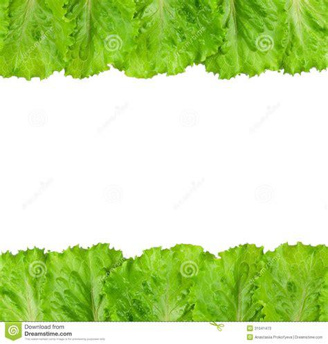 imagenes lechugas verdes lechuga verde fotos de archivo imagen 31041473
