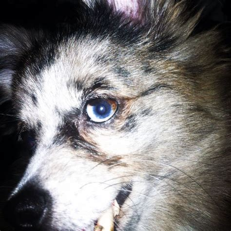 my pomeranian has diarrhea 17 best images about on other colors and the o jays