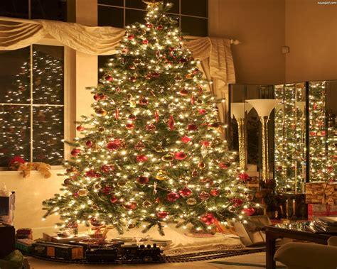 west mathi best christmas tree choinka żywa czy sztuczna