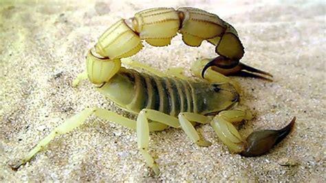 Imagenes De Animales Venenosos | top 20 animales mas venenosos del mundo youtube