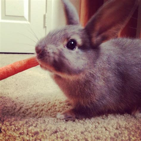 are bunnies color blind 23 best bunnies images on bunnies