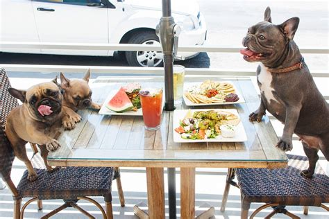 dog hotels in los angeles