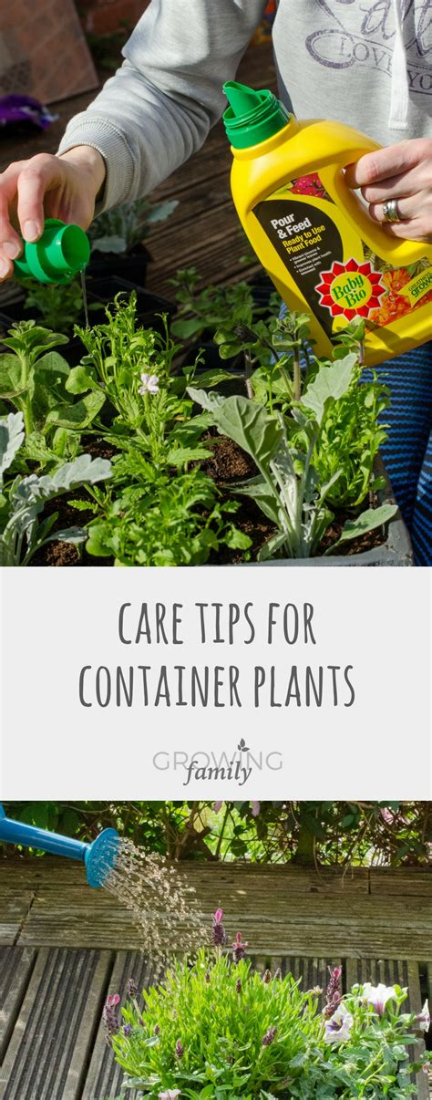 desk plant maintenance helpful tips to care for plants plant care tips for containers growing family