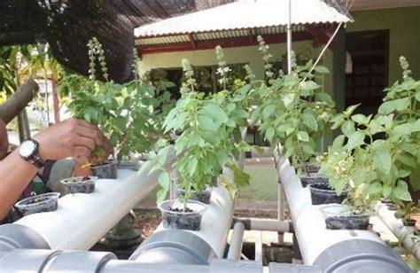 menanam hidroponik sistem nft cara menanam kemangi hidroponik bibitbunga com