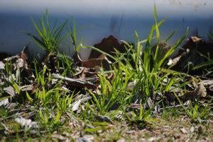 Rasenpflege Im Winter by Rasenpflege Im Fr 252 Hjahr So Geht S Garten Mix