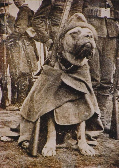 Sgt Stubby American Legion 107 Best Dogs Images On