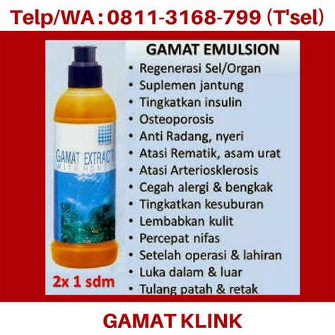 Gamat Extract Emulsion Kesuburan Rematik Patah Tulang 0811 3168 799 T Sel Gamat K Link Untuk Ibu