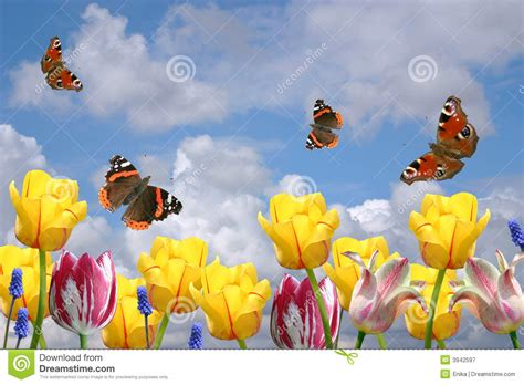 fiori e farfalle fiori e farfalle della sorgente immagine stock immagine