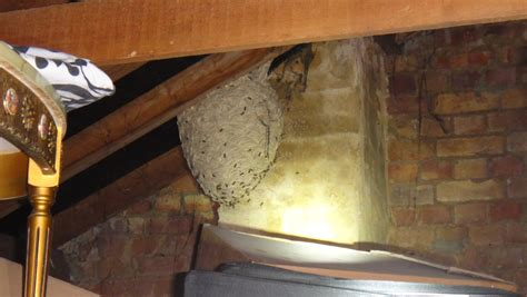 wasp in my bedroom image gallery hornets nest in loft